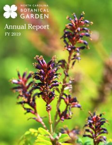 cover of fy2019 annual report