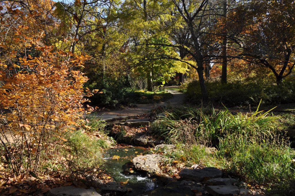 Coker Arboretum in autumn