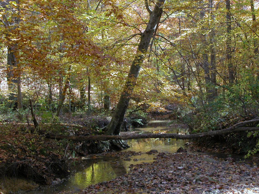 Stream running through Coker Pinetum in autumn