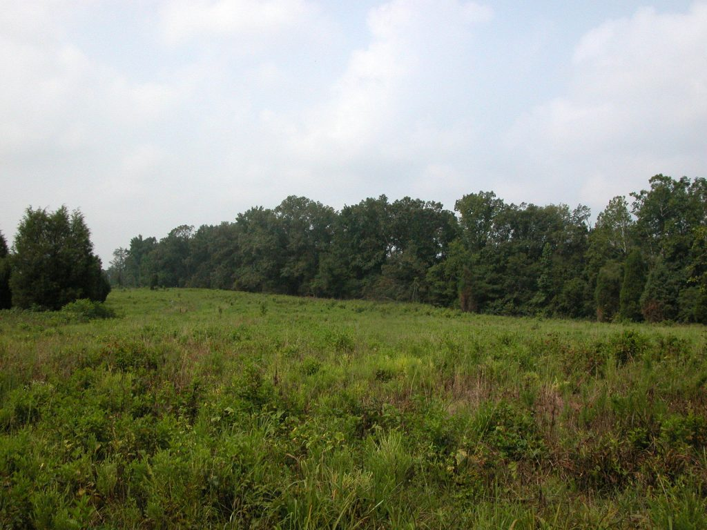 The field at Penny's Bend Nature Preserve