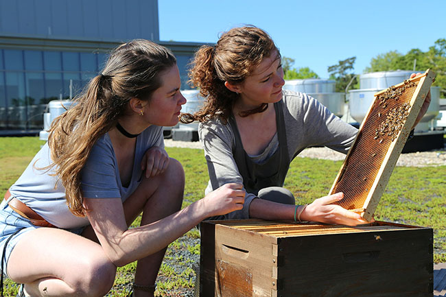 student beekeepers checking hive