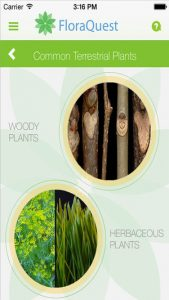 Screenshot of the FloraQuest app showing common terrestrial plants, woody and herbaceous