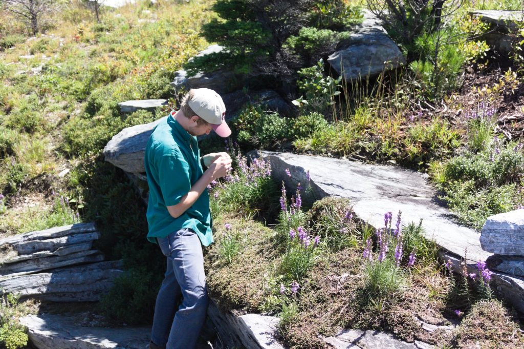 student botanizing