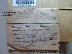 Herbarium specimen collected by F. S. Chapman