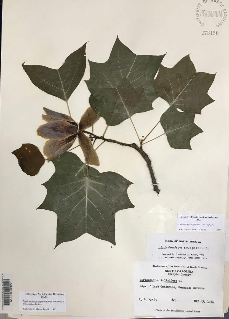 illustration for Raymond Louis Wyatt, Herbarium collector page