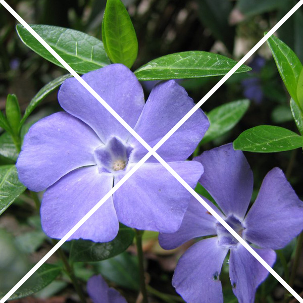 periwinkle with an x through it