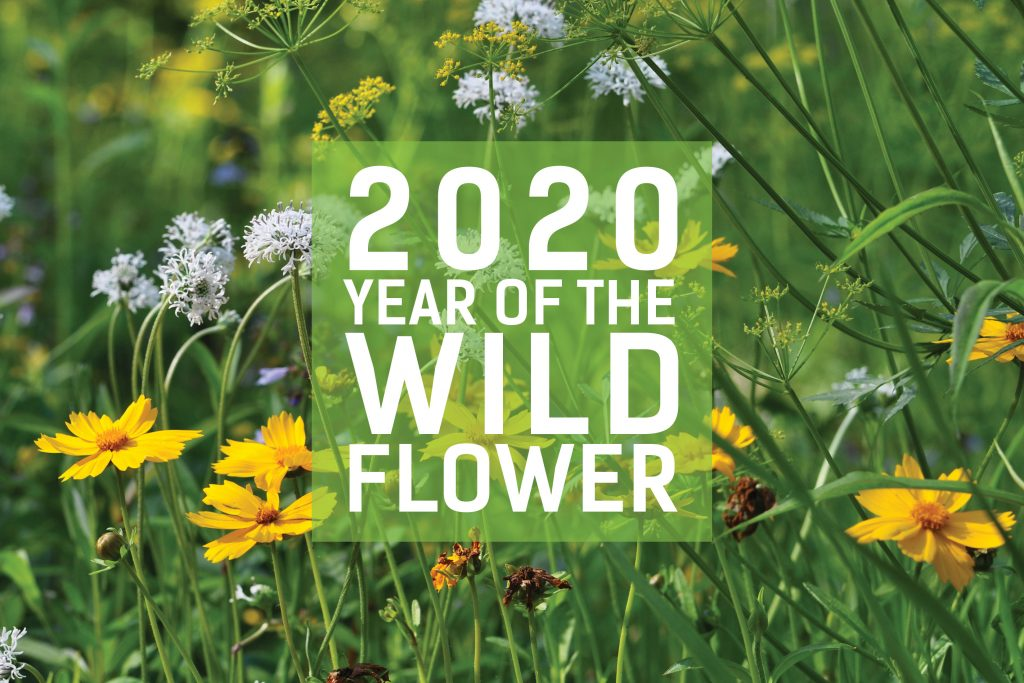 wildflowers and text 202: Year of the Wildflower