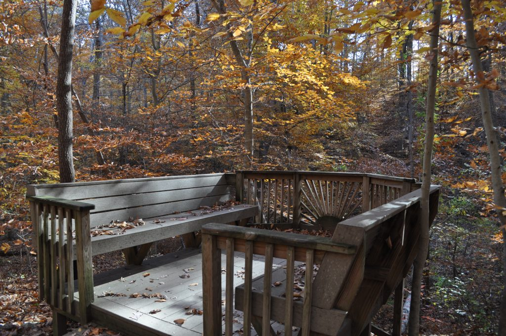 A wooden deck overlooks the forest of Battle Park