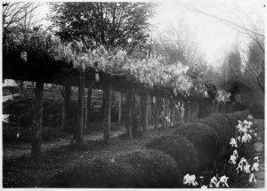 Historical photo of Coker Arboretum
