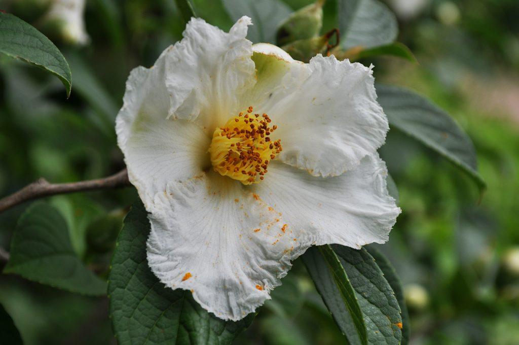 A summer bloom in Coker Arboretum