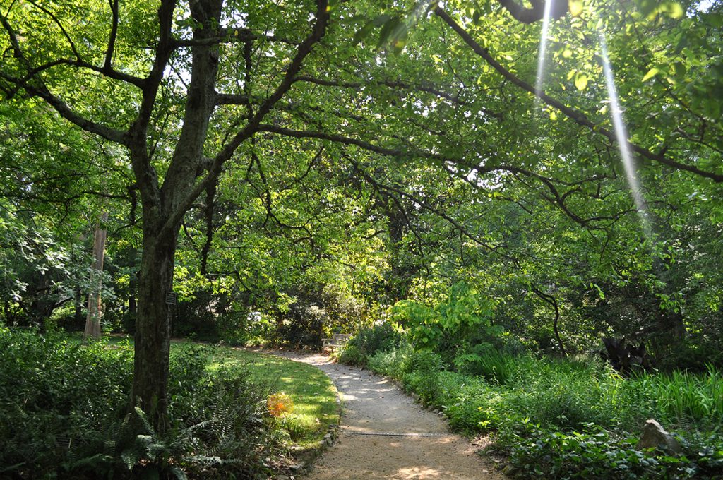 A summer scene, with light filtering through the green leaves as a path curves around to the left.