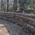 Wattle fence in the Garden