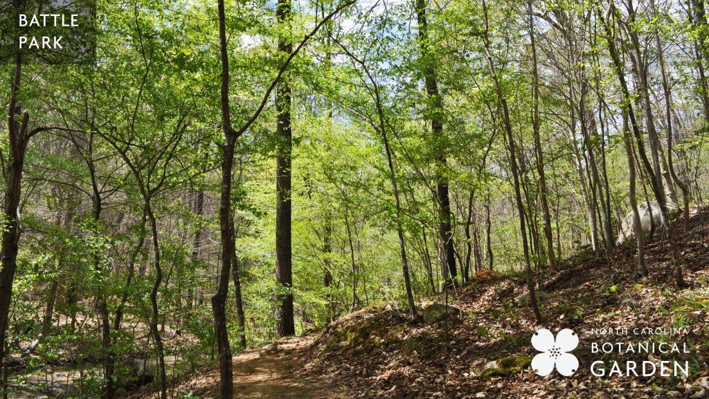 Battle Park wooded trail in spring desktop or Zoom background