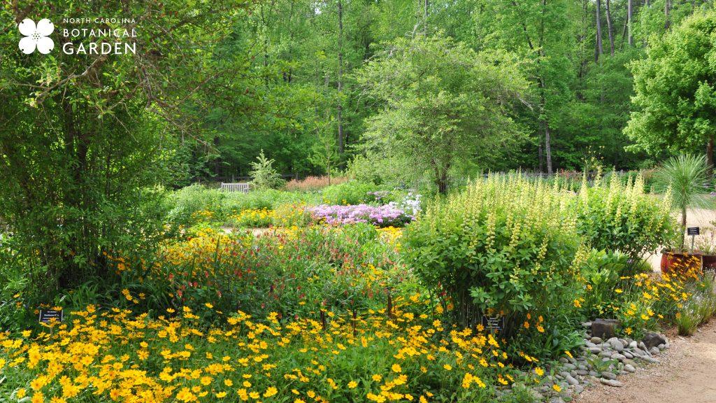 Courtyard Gardens in spring desktop or Zoom background