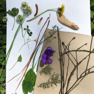 Materials for a nature mosaic: wildflowers, twigs, leaves, and paper