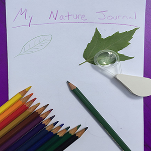 sample nature journal with materials including colored pencils and a hand lens