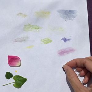 sample page of pigments made with plants: green, pink, purple, blue, yellow