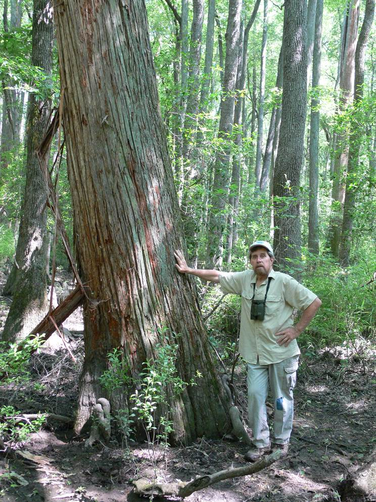 A portrait of Bruce Sorrie placing his hand against the trunk of a tree.