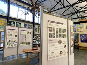 Saving Our Wildflowers exhibit panels up in the NCBG Pegg Exhibit Hall