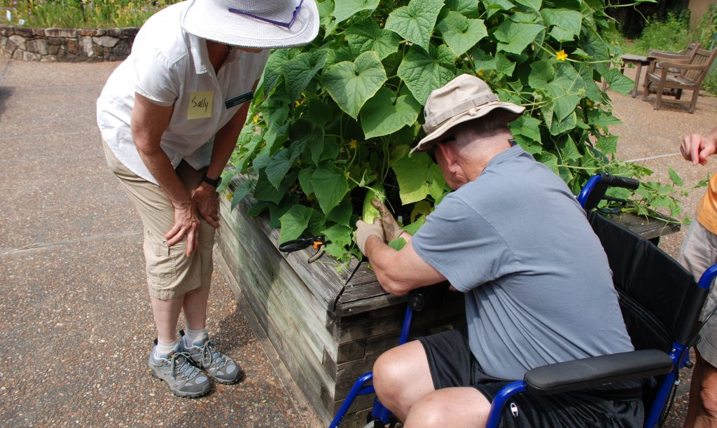 A man using a wheelchair harvests a cucumber from a raised garden bed. A staff person stands nearby to help.