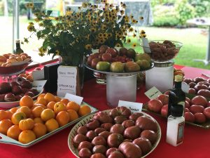 various tomato varieties available for tasting