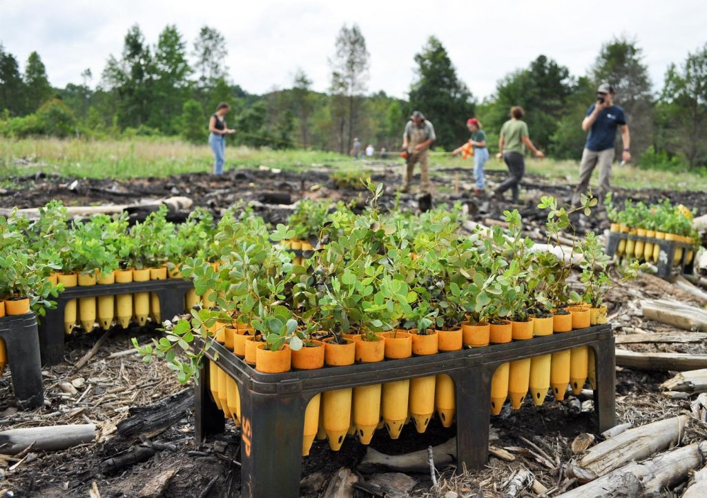 Glade blue wild indigo seedlings sit in trays as Garden staff and interns prepare to plant them in the background